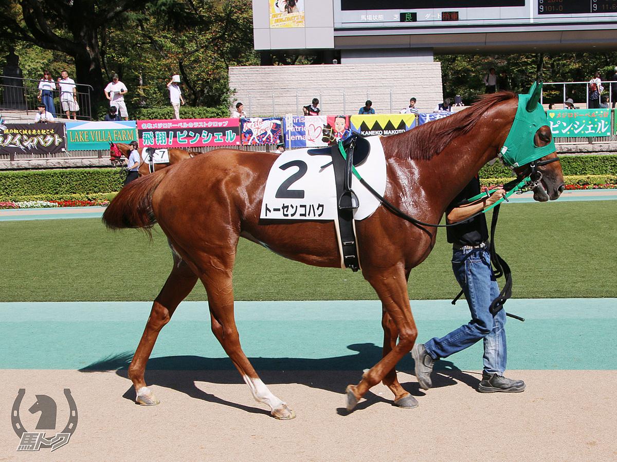 トーセンコハクの馬体写真