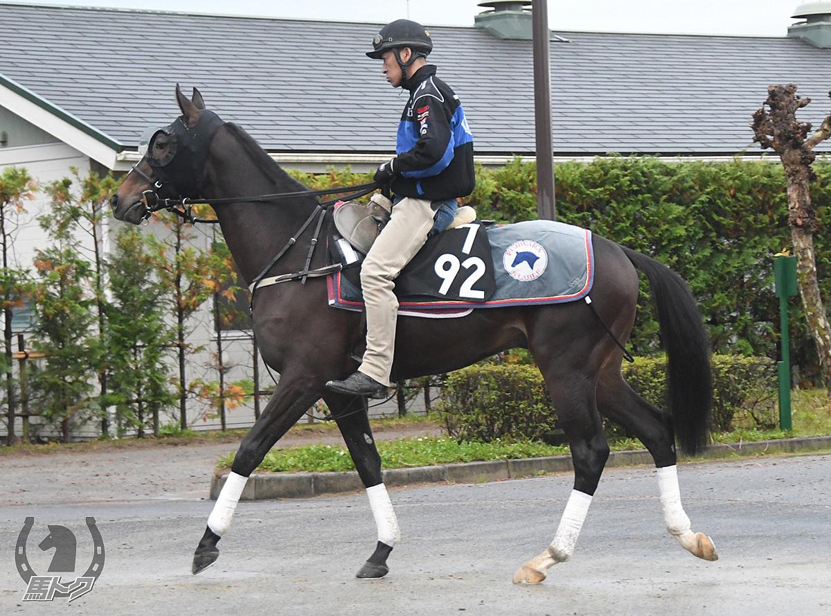 ハーシェルの馬体写真
