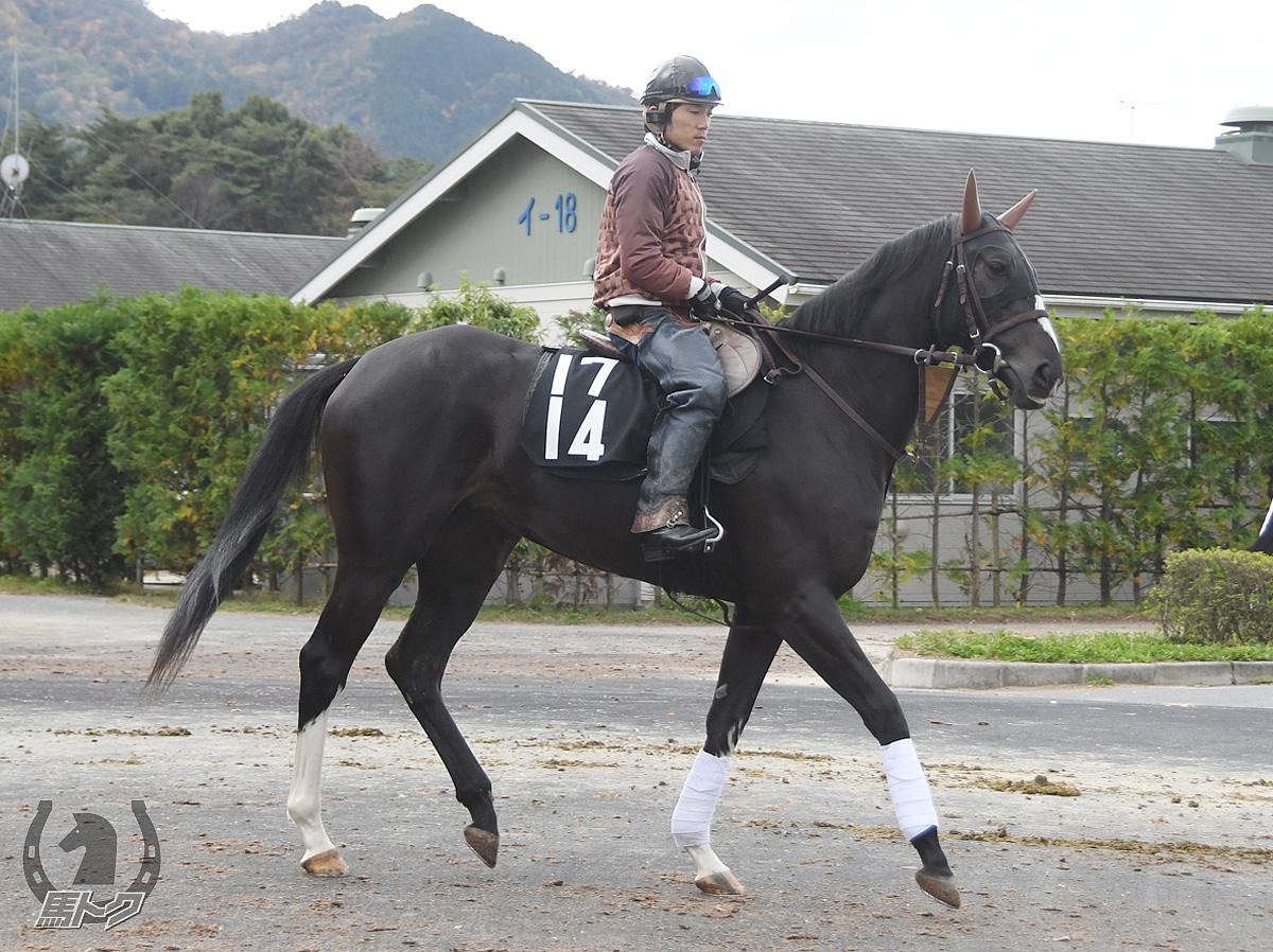 ハートウォーミングの馬体写真