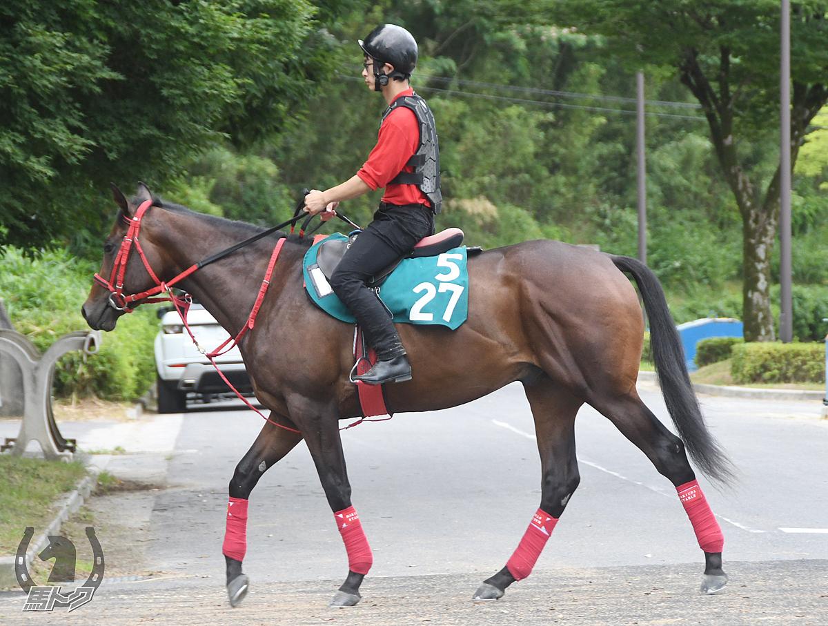 クレイヴの馬体写真