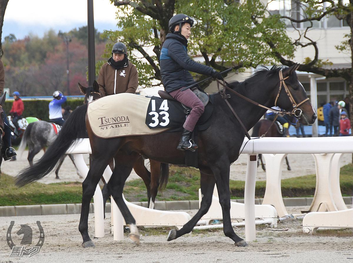エンダウメントの馬体写真
