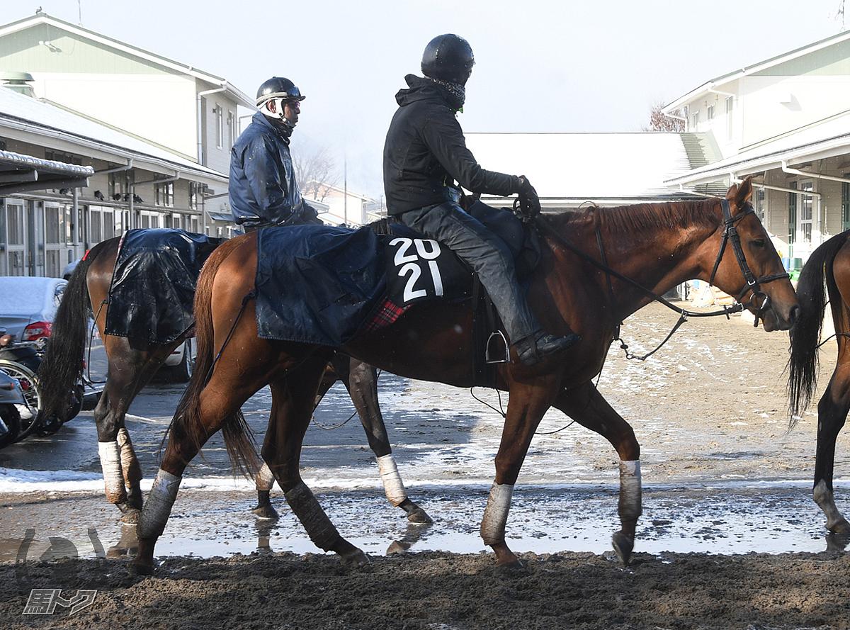 プレシャスメタルの馬体写真