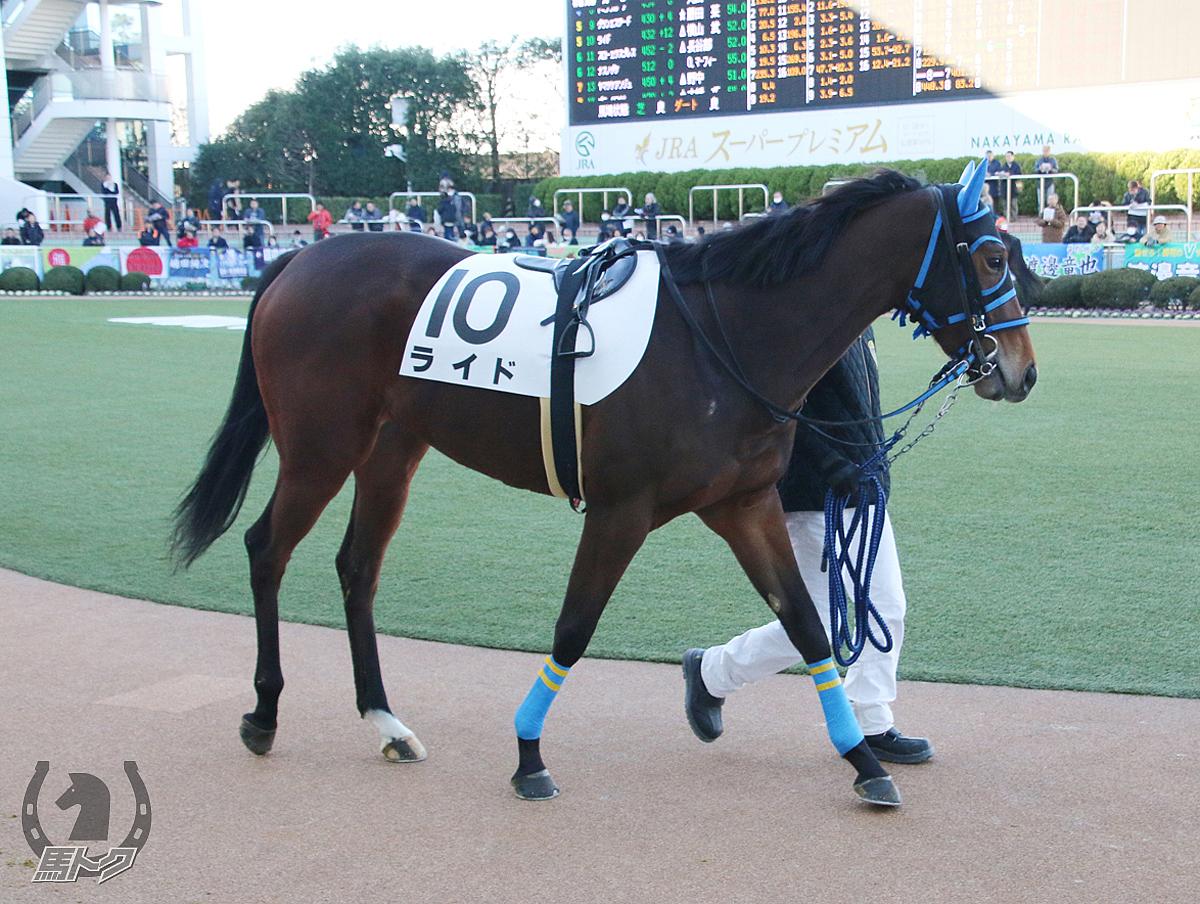ライドの馬体写真