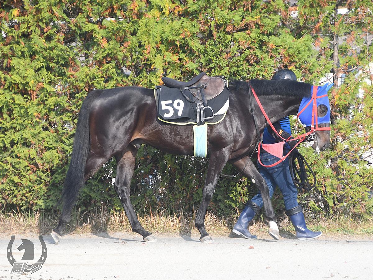 アルセーヌの馬体写真