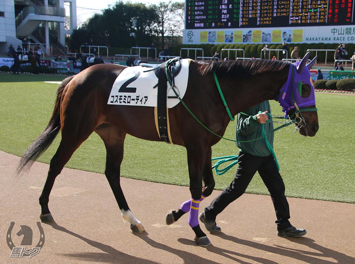 コスモミローディアの馬体写真