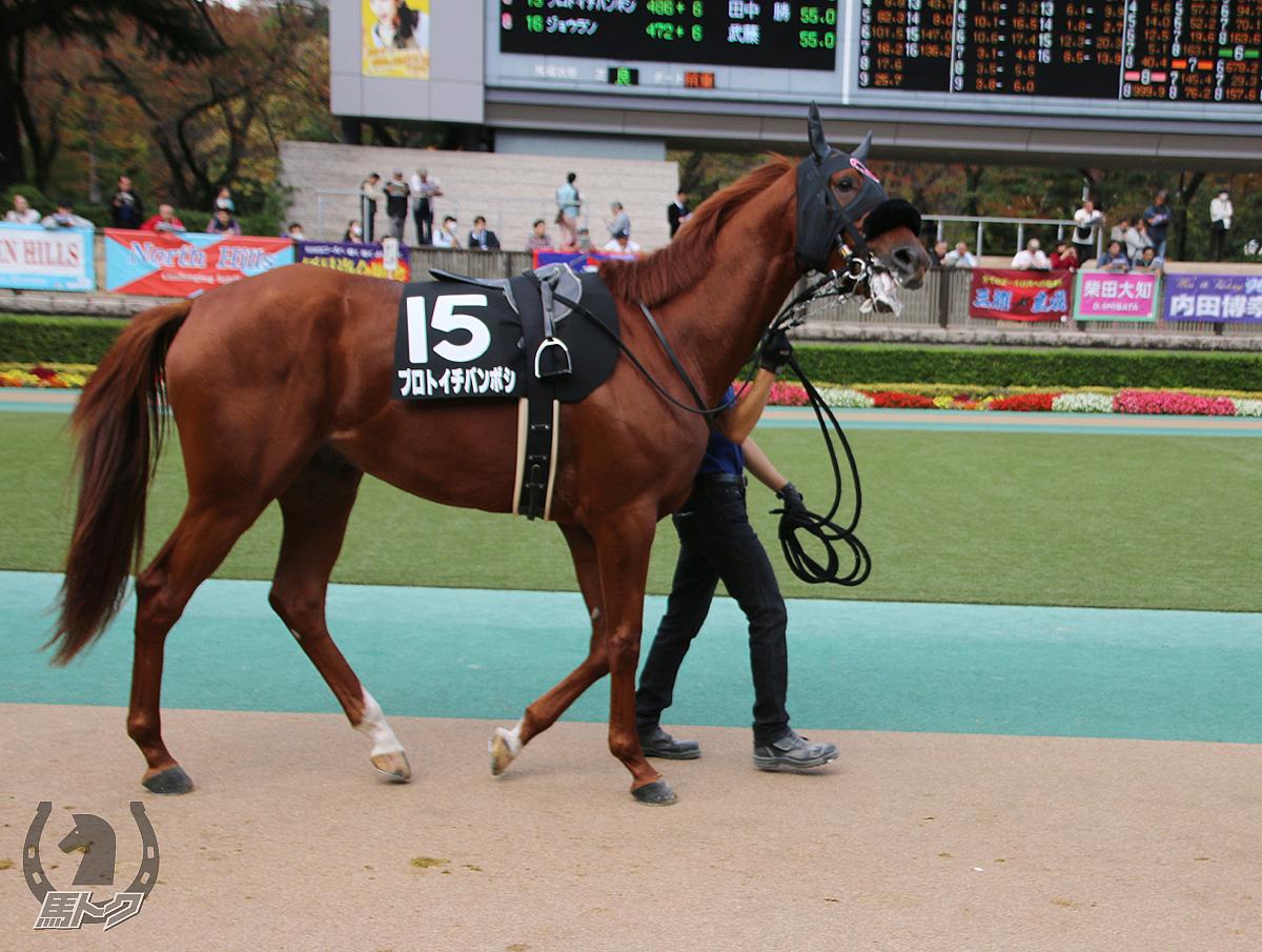 プロトイチバンボシの馬体写真