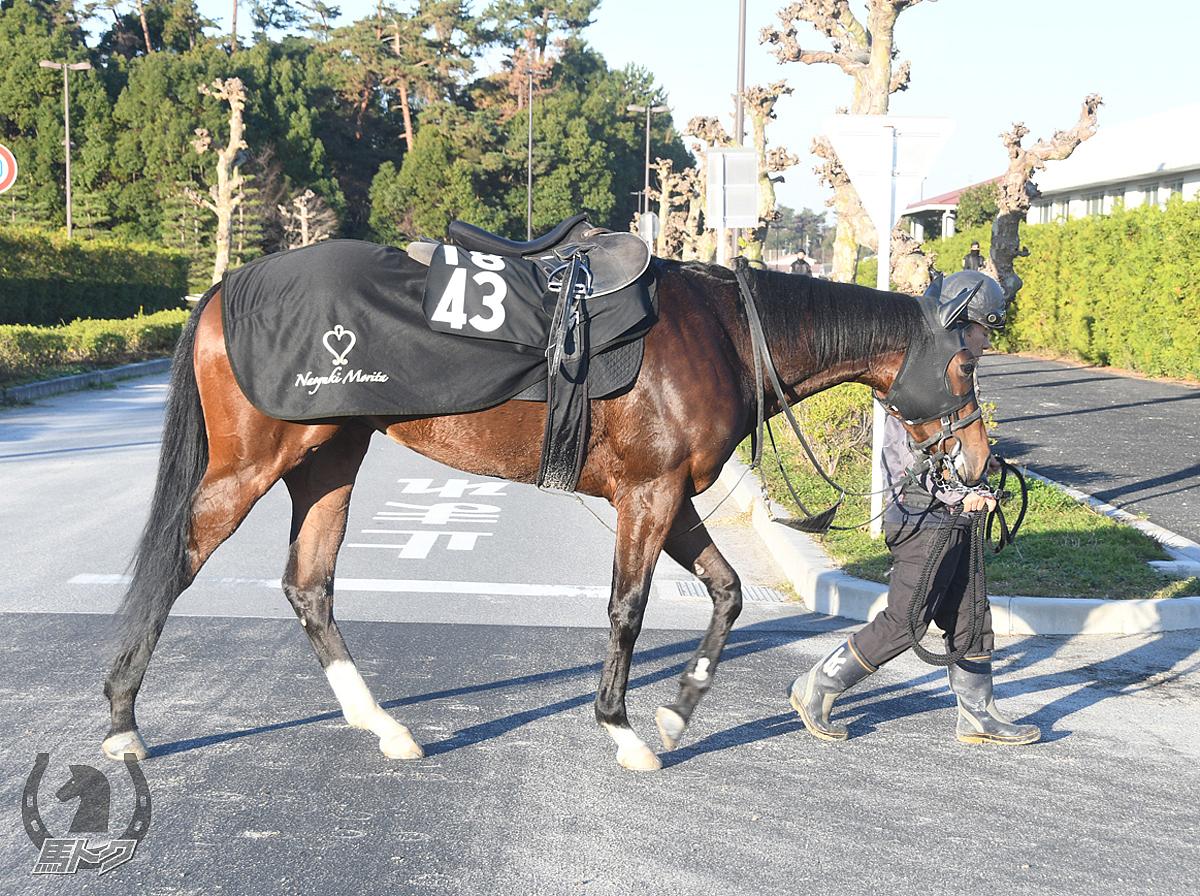 ナムラアリスの馬体写真