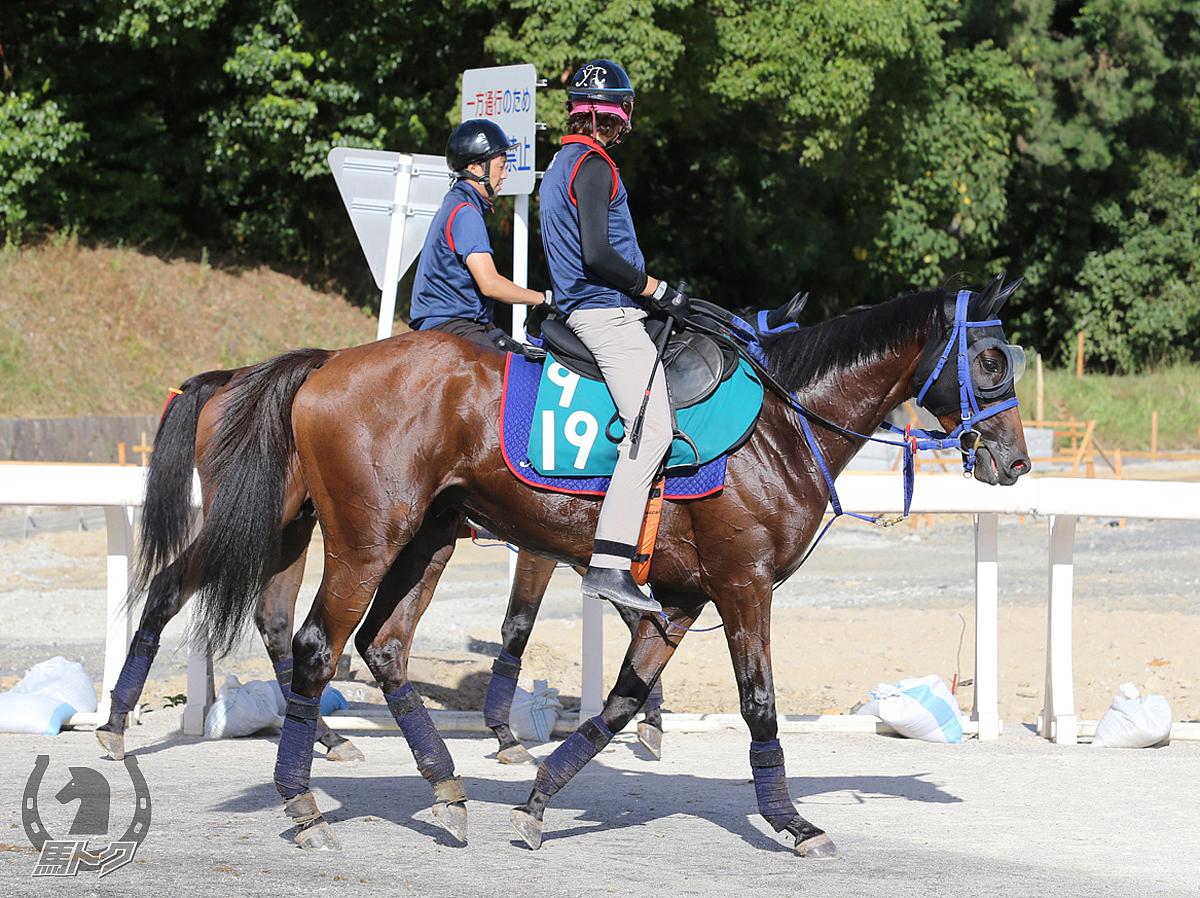 タイセイスキャットの馬体写真