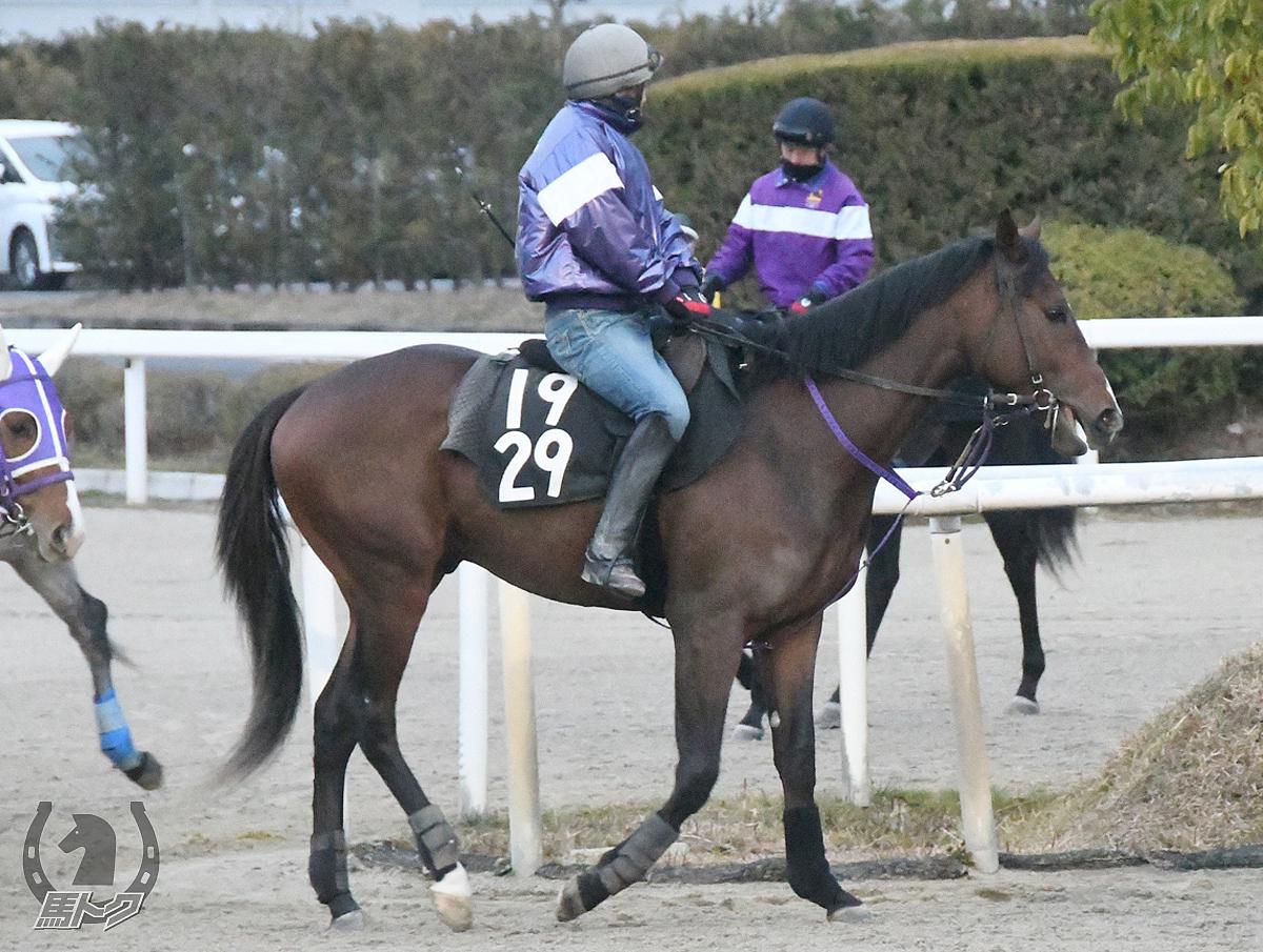 スズノチェルシーの馬体写真