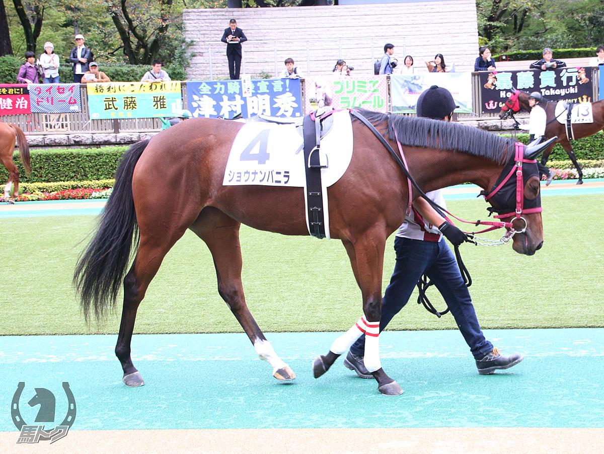 ショウナンバニラの馬体写真