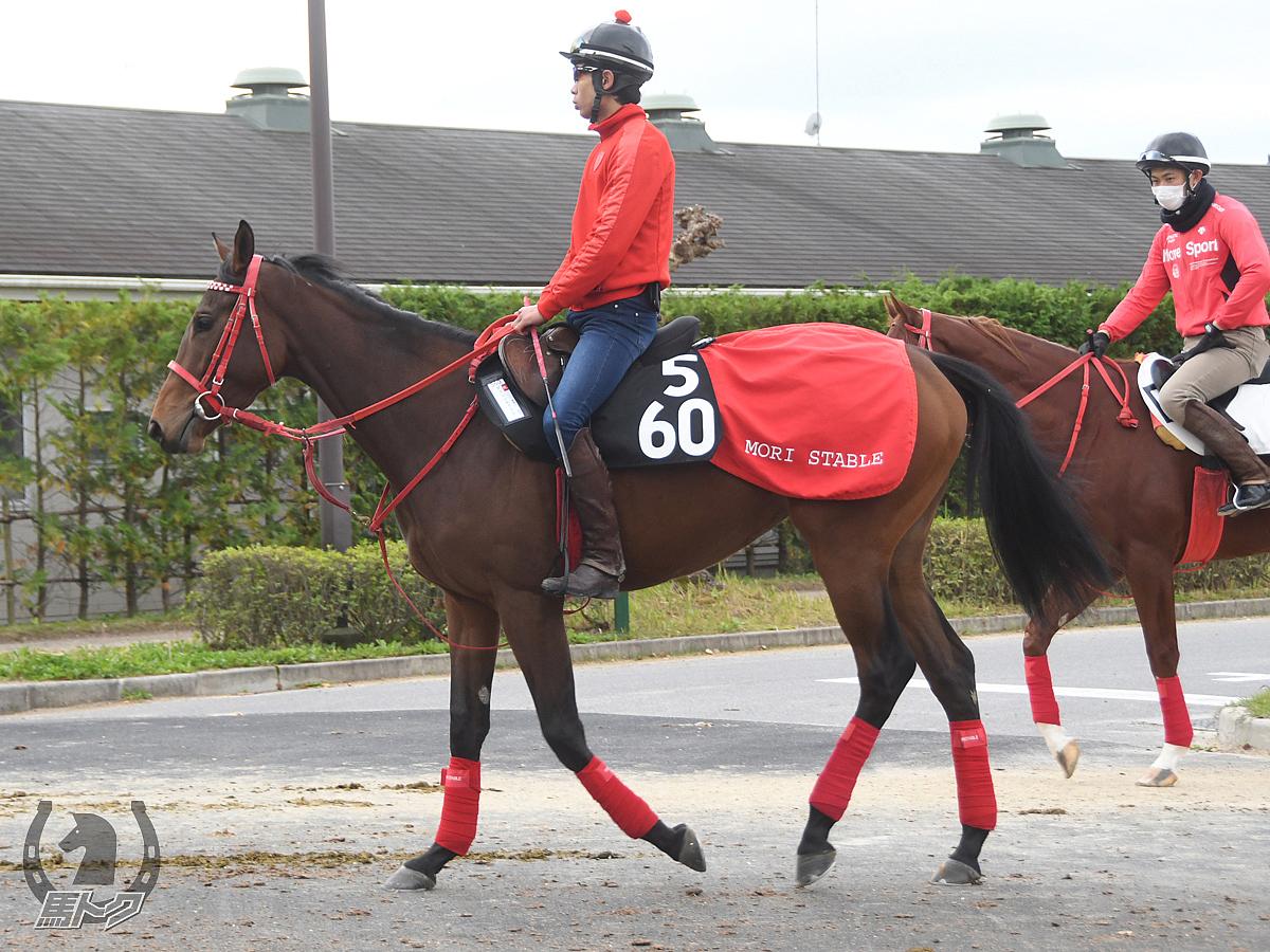 ダイシンキャラミの馬体写真