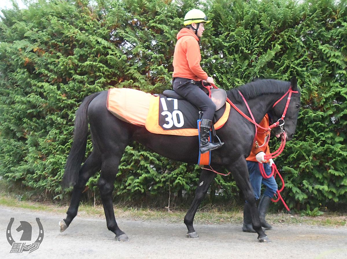 セイウンカイドウの馬体写真