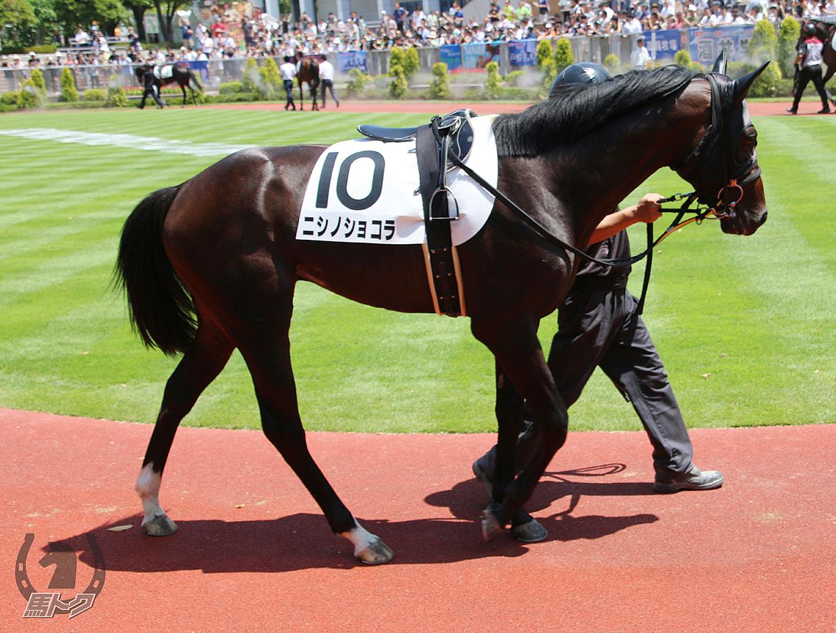 ニシノショコラの馬体写真