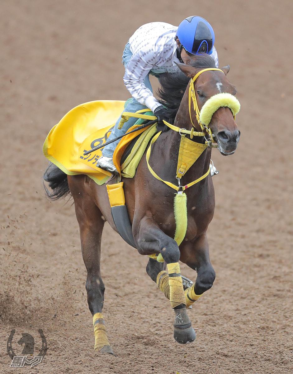 ニシノデイジーの馬体写真