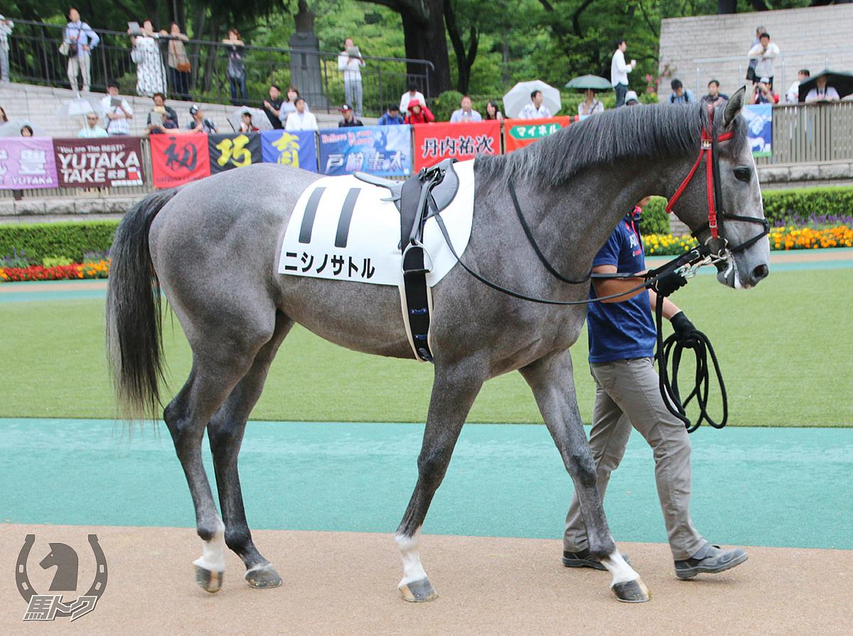 ニシノサトルの馬体写真