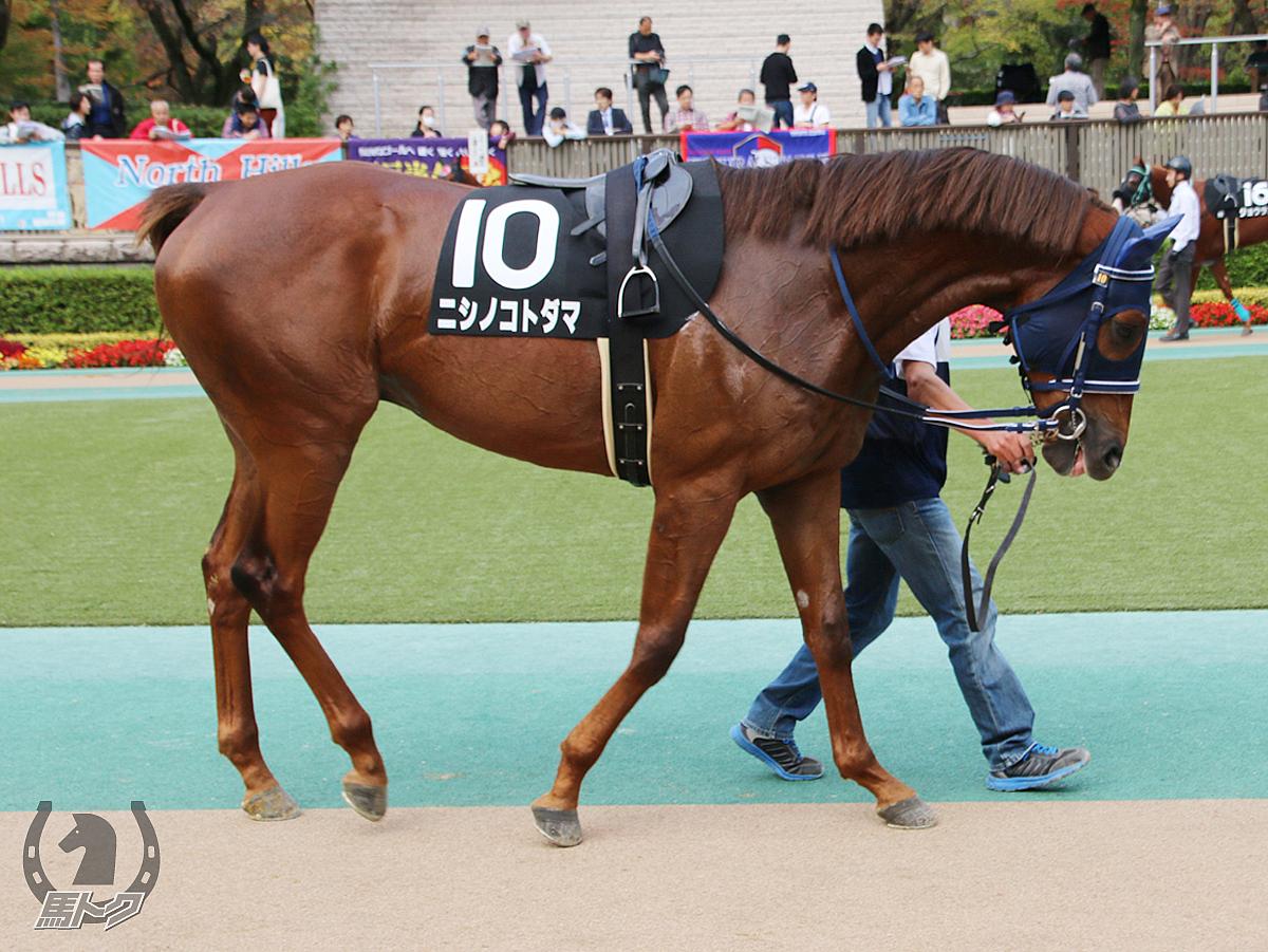 ニシノコトダマの馬体写真