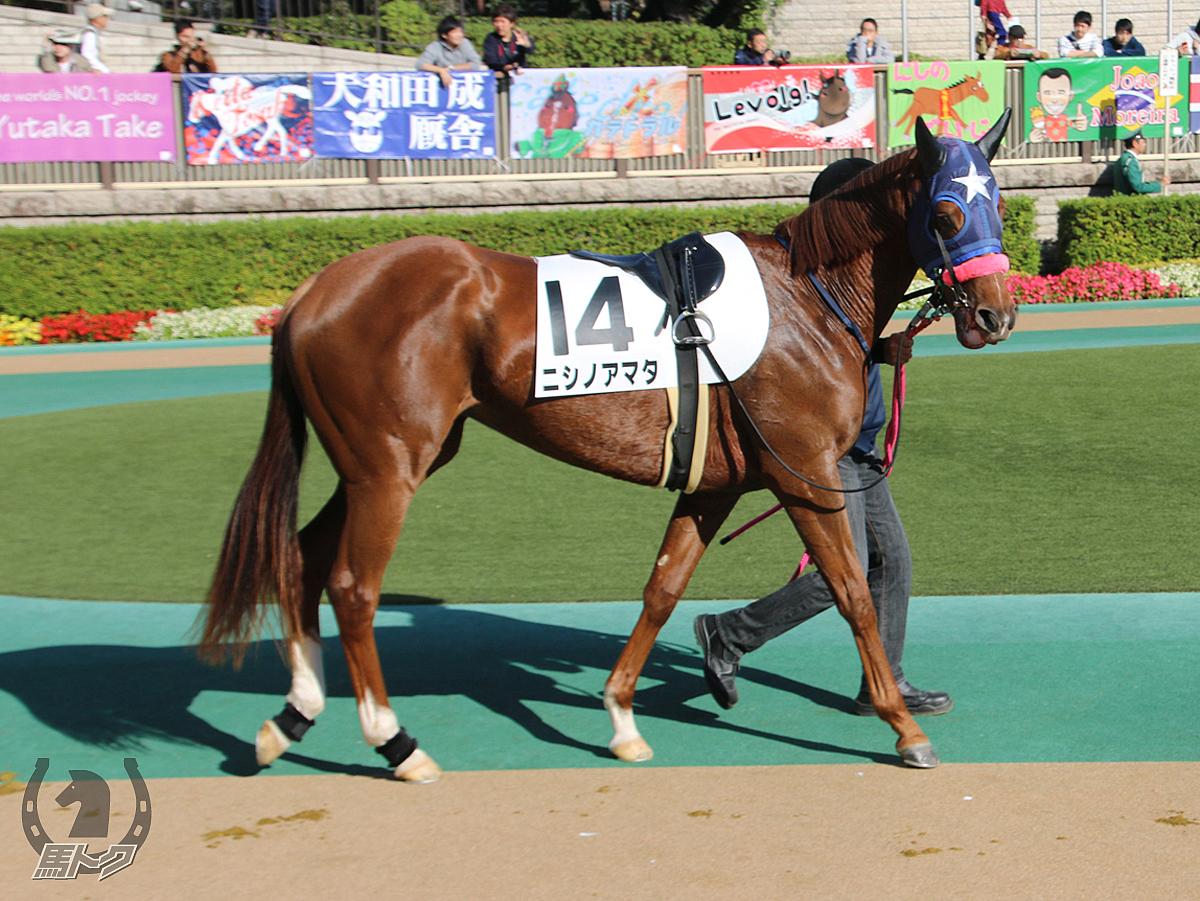 ニシノアマタの馬体写真