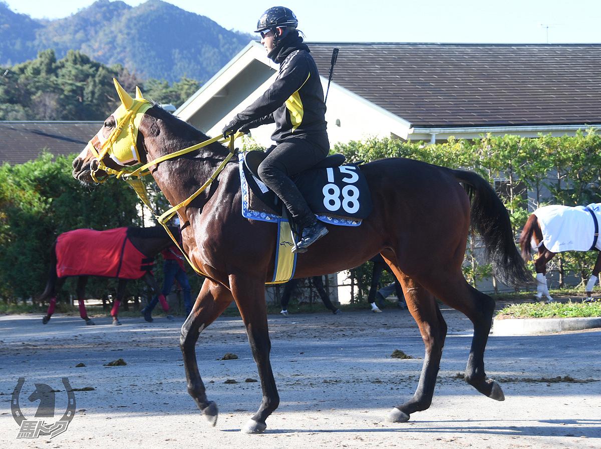 ニシノケイガンの馬体写真