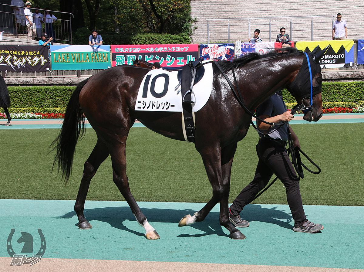 ニシノドレッシーの馬体写真