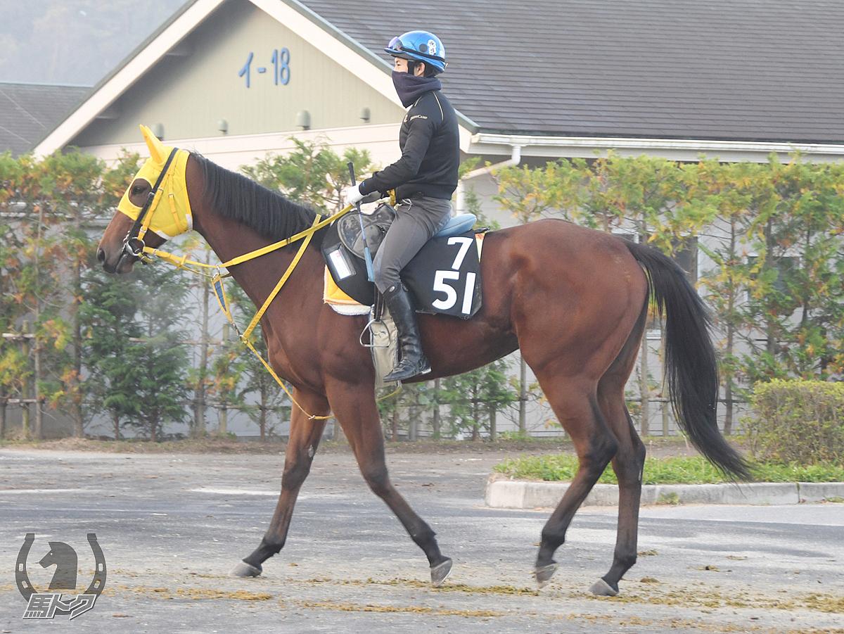 ノーブルアーレスの馬体写真