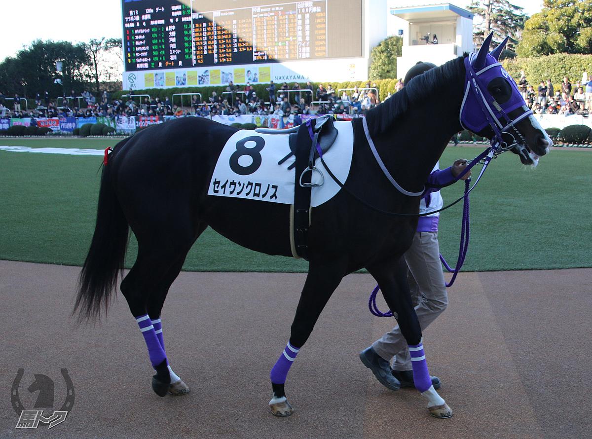 セイウンクロノスの馬体写真