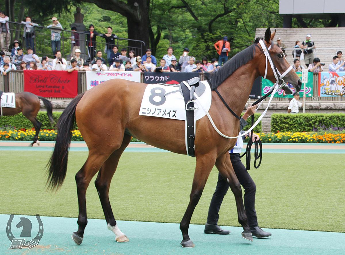 ニシノアメイズの馬体写真