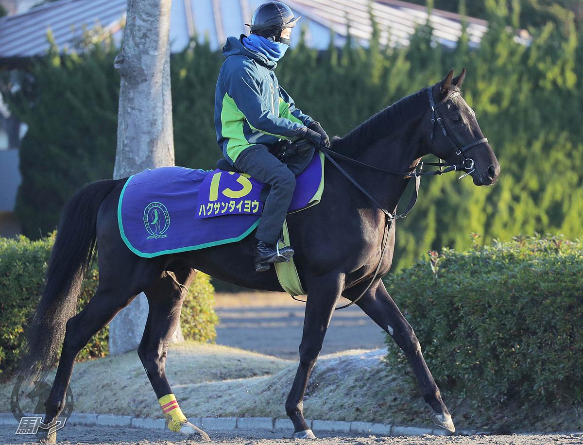 ハクサンタイヨウの馬体写真