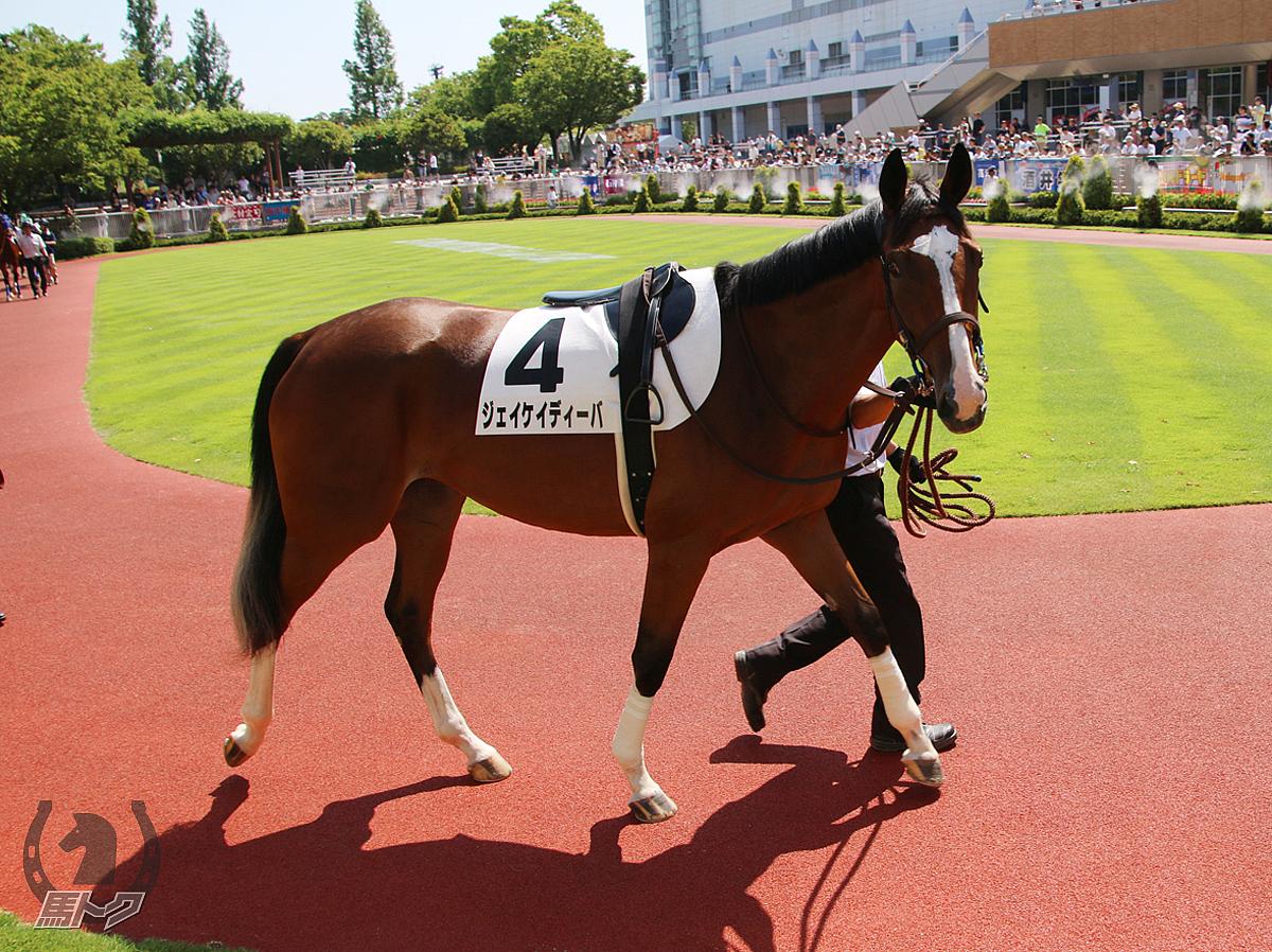 ジェイケイディーバの馬体写真