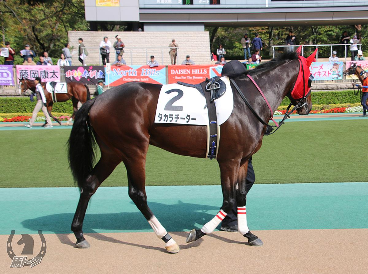 タカラチーターの馬体写真