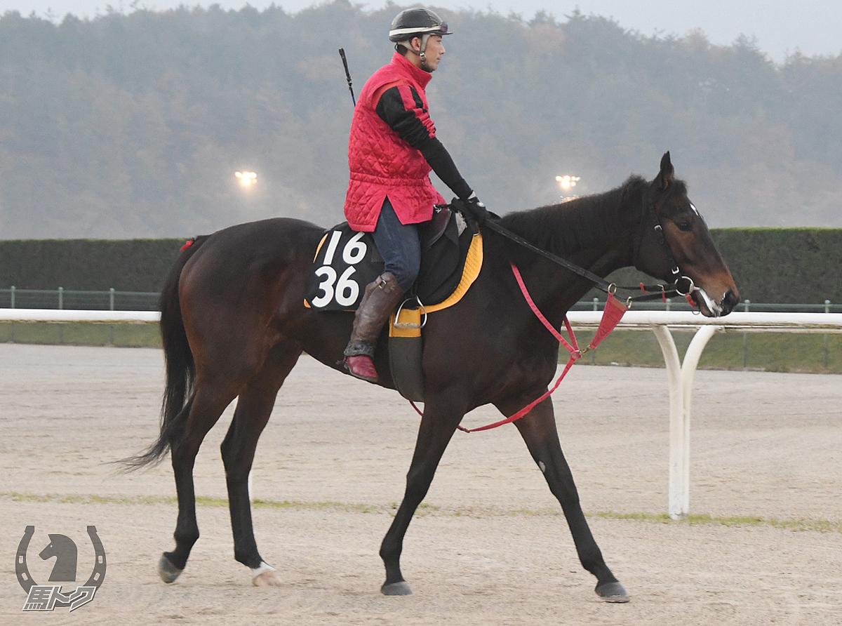 ペイシャマキアージの馬体写真
