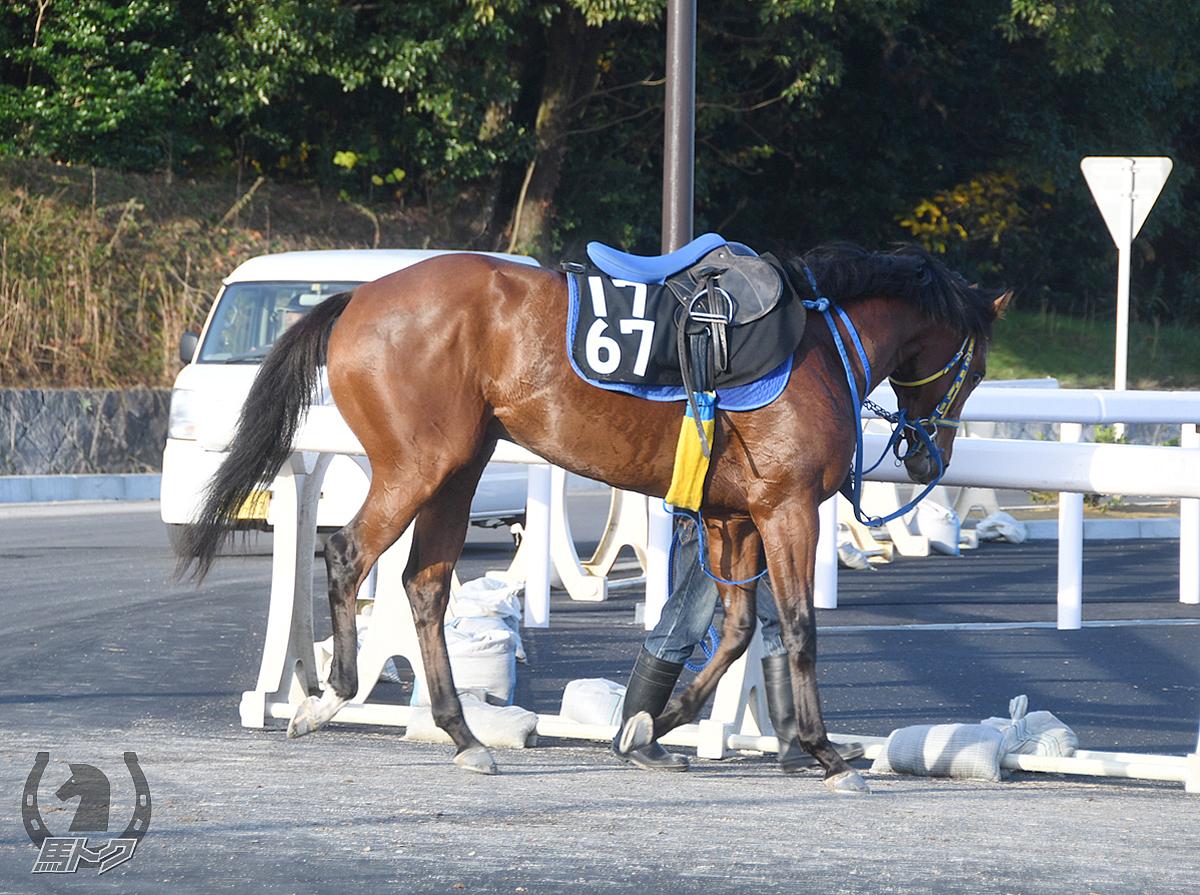 ラインエミネントの馬体写真