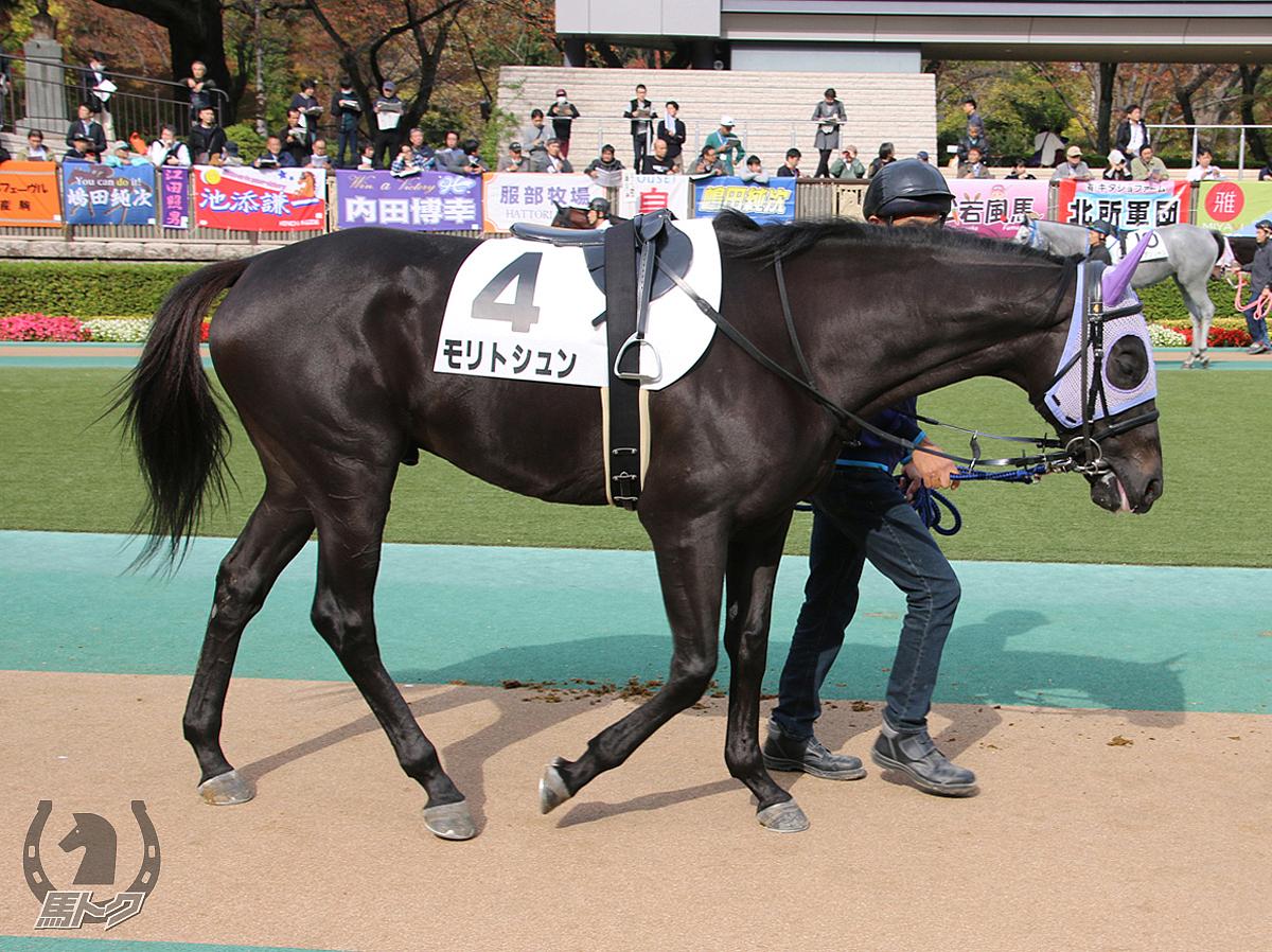 モリトシュンの馬体写真