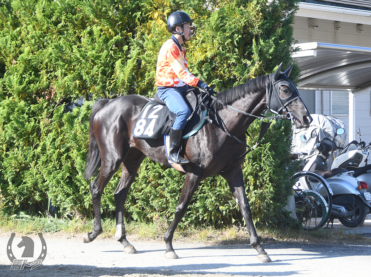テイエムメデタシの馬体写真