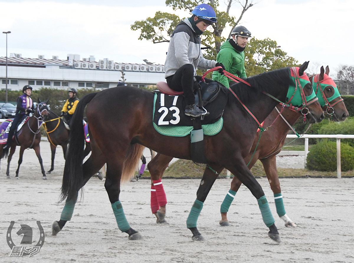 テイエムウインドの馬体写真