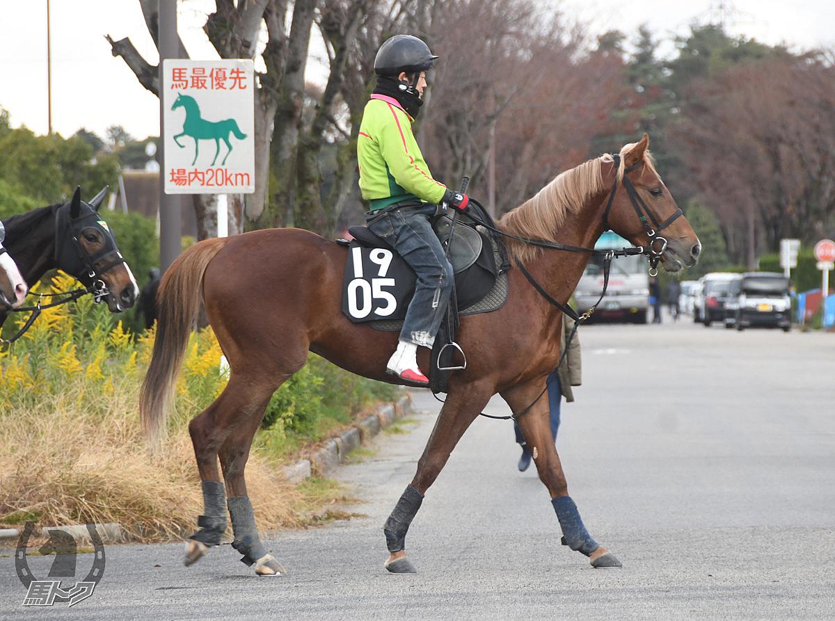 テイエムマイスターの馬体写真
