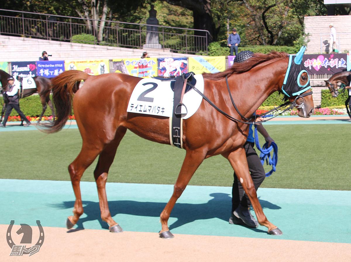 テイエムマバタキの馬体写真