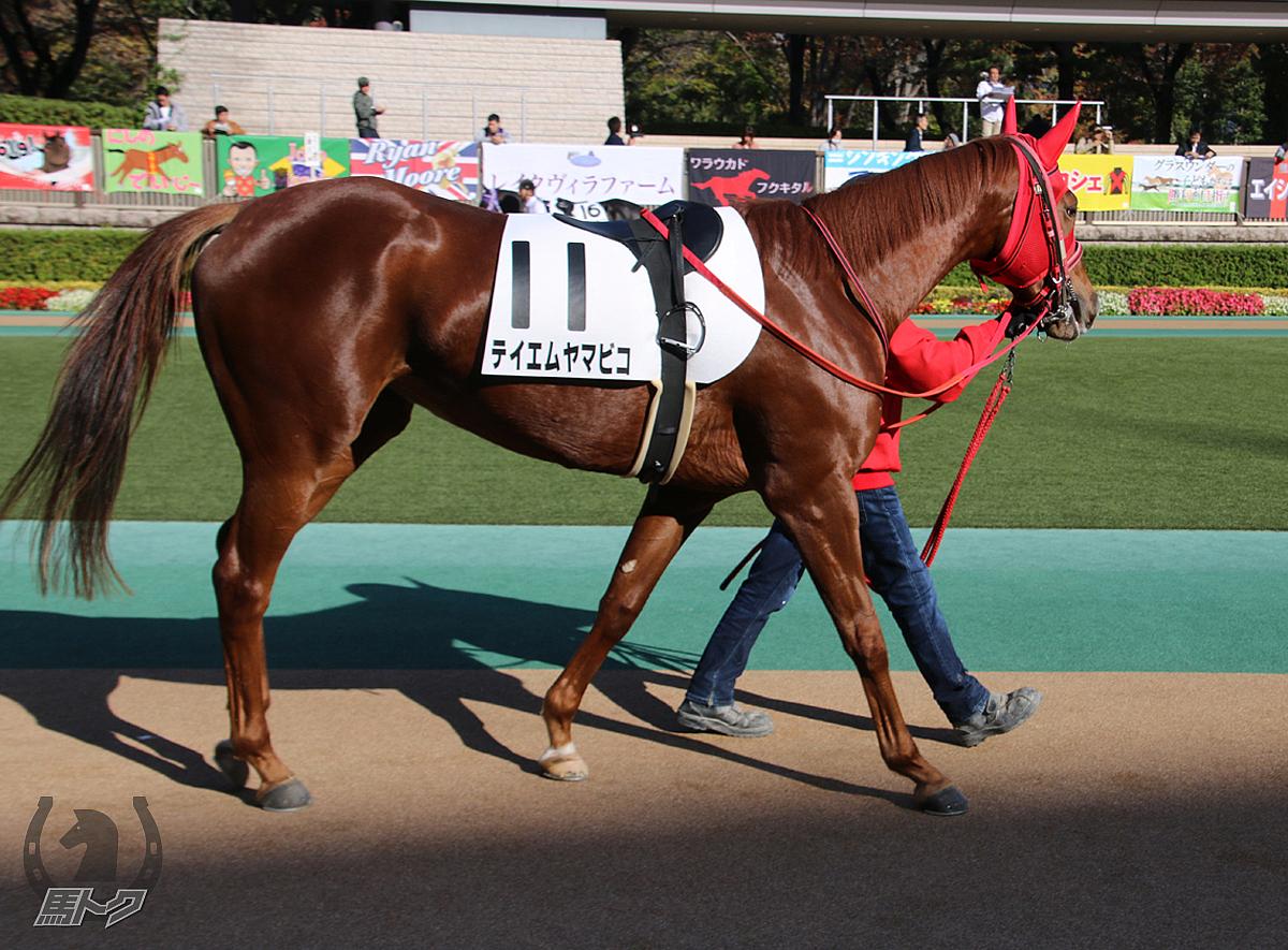 テイエムヤマビコの馬体写真