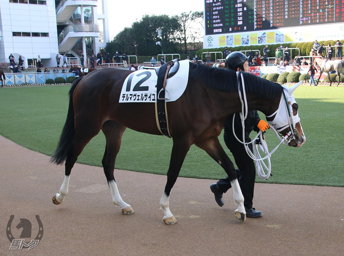 デルマヴェルサイユの馬体写真