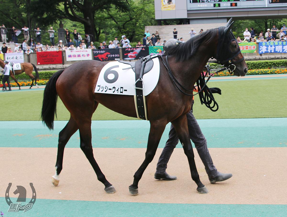 プッシーウィローの馬体写真