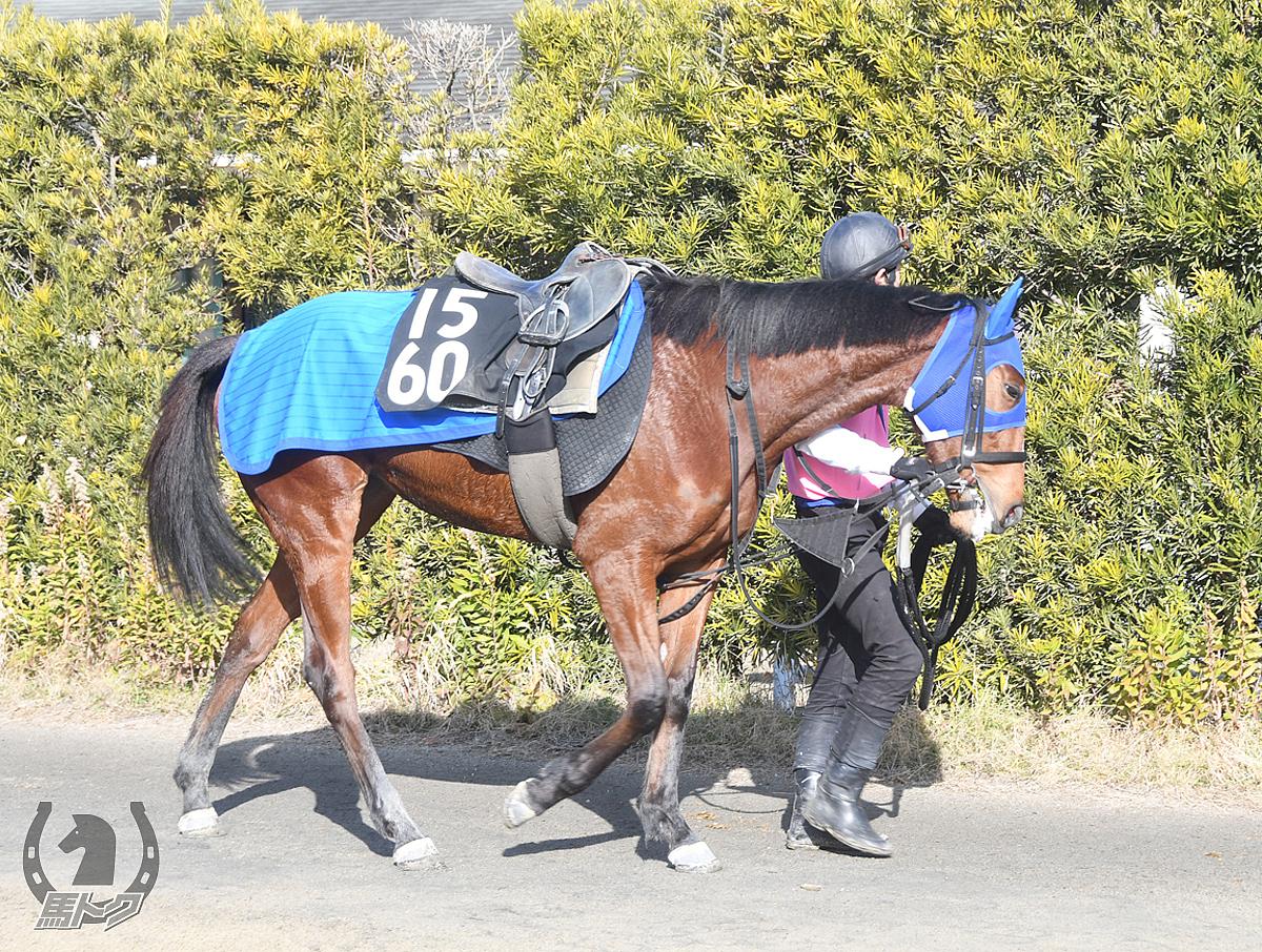 ルフレシャンスの馬体写真