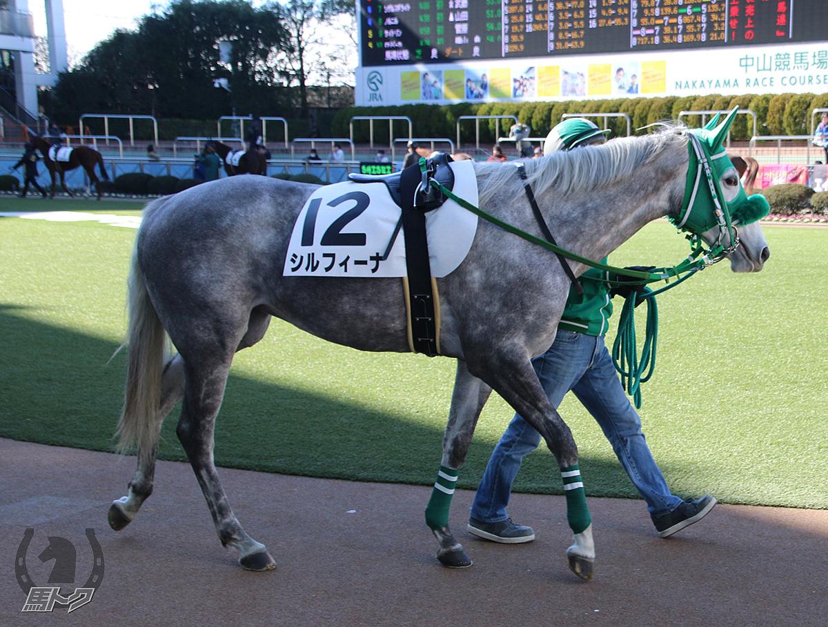 シルフィーナの馬体写真