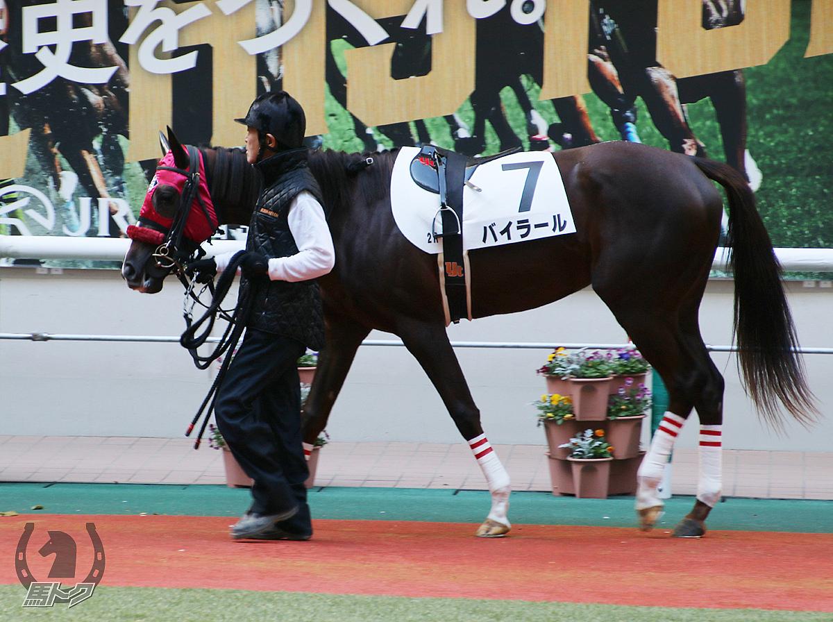 バイラールの馬体写真