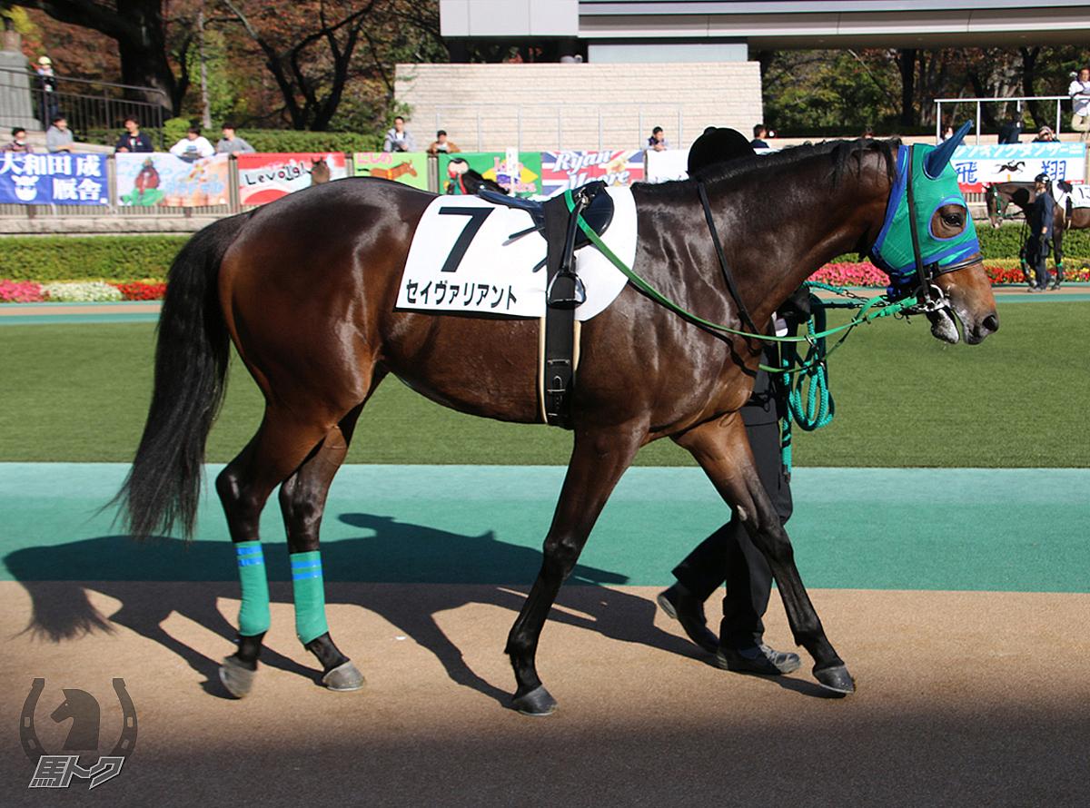 セイヴァリアントの馬体写真