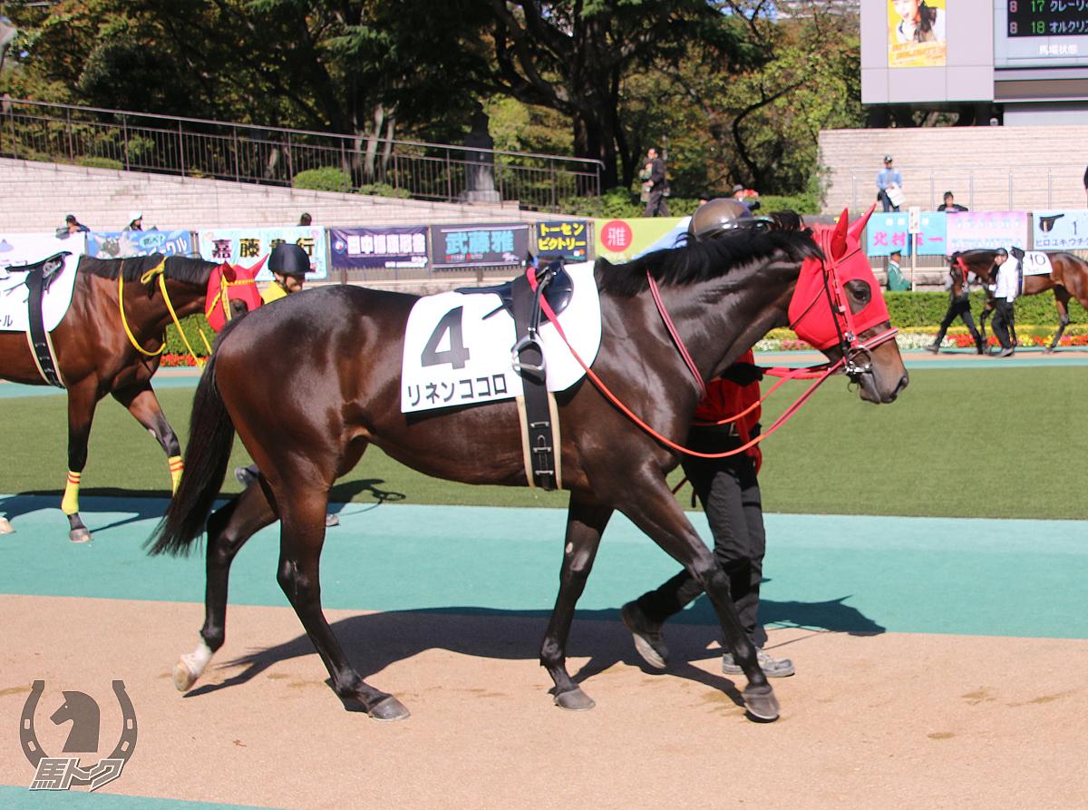 リネンココロの馬体写真