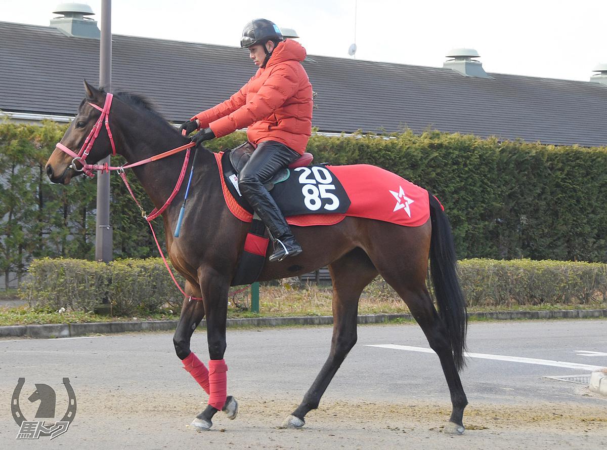 マルヨフローラの馬体写真