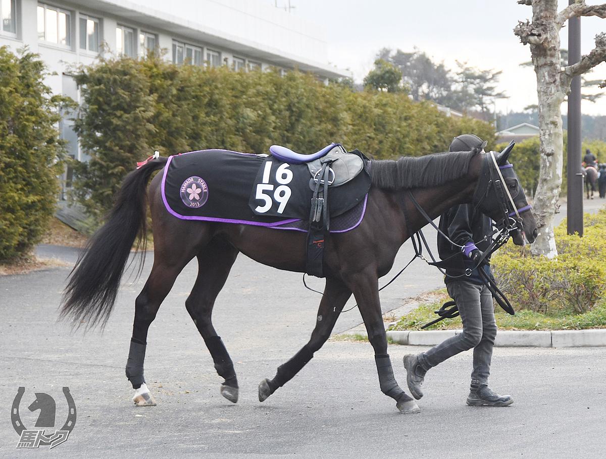 アラタマピサの馬体写真