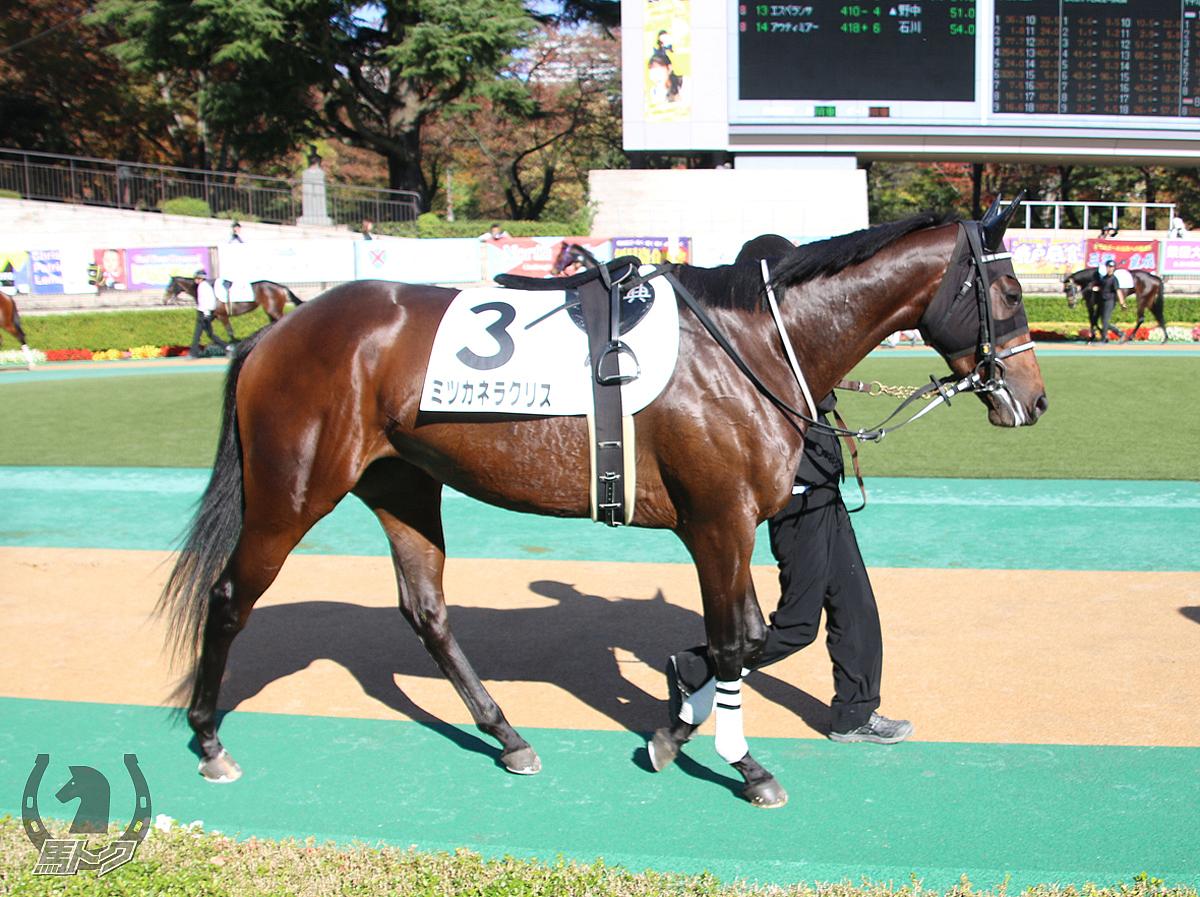 ミツカネラクリスの馬体写真