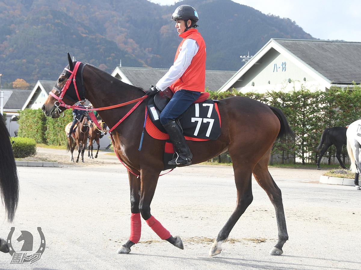 ファーマトパーズの馬体写真