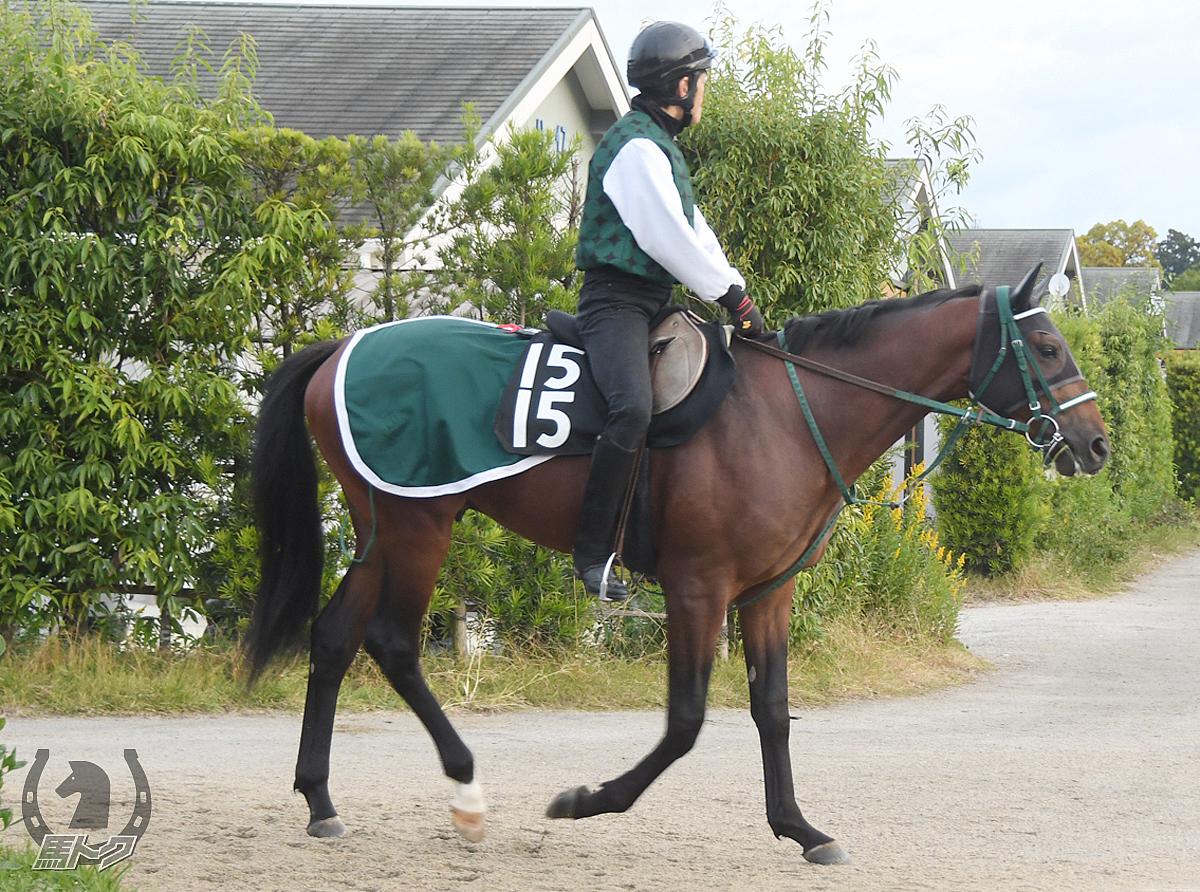 ザプラウドワンズの馬体写真