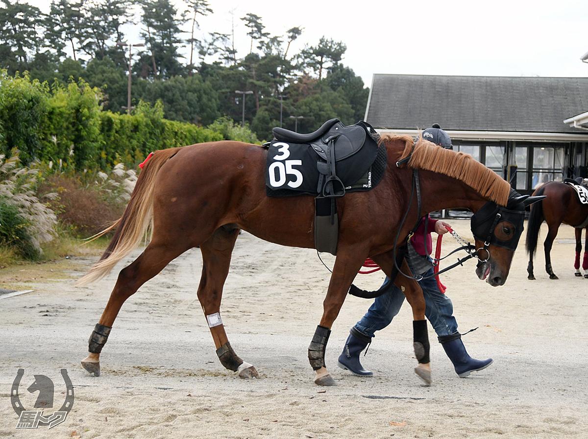 クリノガウディーの馬体写真
